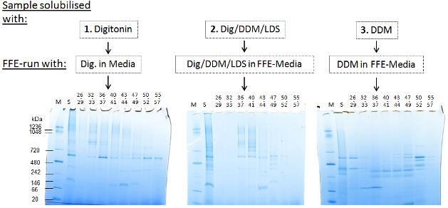 Proteincomplex 002